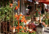 Blumen Galerie
